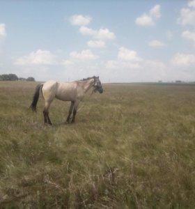 Лошадь скаковая