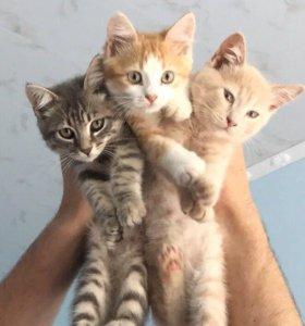 Котята мальчики !