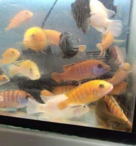 Продам разных рыбок