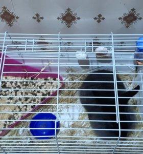 Кролик черный декоративный 3 месяца девочка