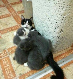 Котята даром. К еде и лотку приучины .