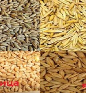 Пшеница, овес, ячмень