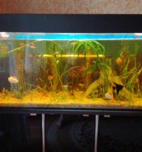 Продам аквариум на 230 литров