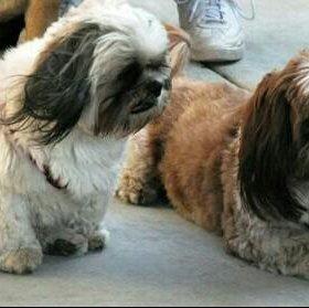 Помощь в уходе за собакой