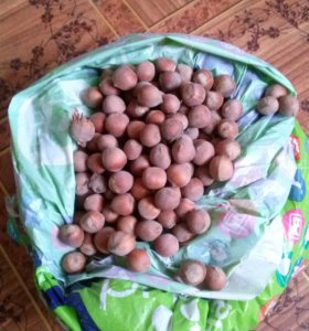 Орехи фундук