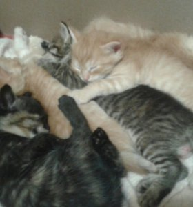 Котята от кошки мышиловки