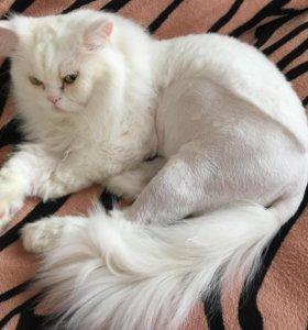 Груминг,стрижка котов,кошек,модельная стрижка.