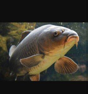 Магазин живой рыбы