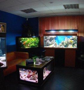 магазин аквариумистики