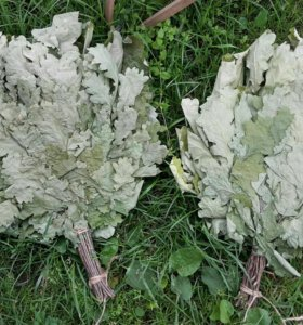 Продаю качественные дубовые и березовые веники