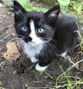 Котята 1,5-2 месяца