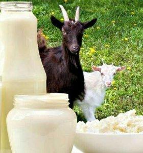 Продаю натуральный козий сыр