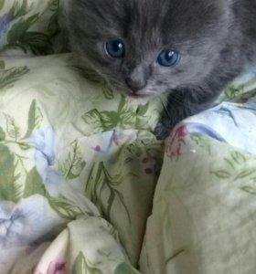 Отдам в хорошие руки котят рожденых 6 июня