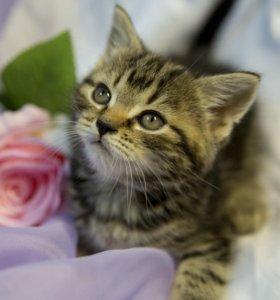 Ласковые игривые котятат
