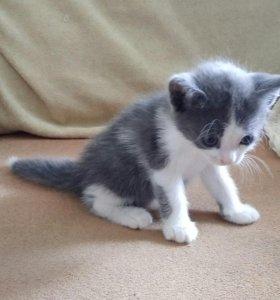 Красивые котята ищут любящих хозяев!