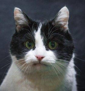Легендарный котик Яся ищет свою идеальную семью!