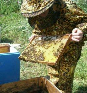 Пасека, пчелы, инвентарь для пчел, медогонка,улья