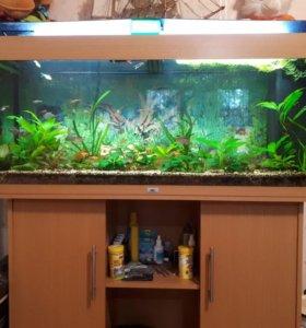 Продам аквариум JUWEL RIO 240L