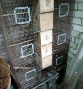 Клетки для попугаев, кроликов
