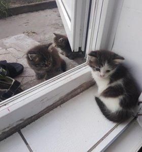 Два котика и кошка