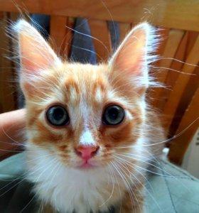 Отдам котенка!Вы хочите котенков их есть у меня!))