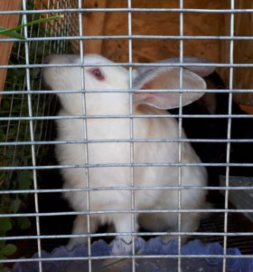 Кролики .