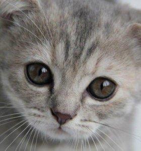 Серые пушистые котятки