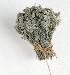 Сушеница - Горные целебные травы Дагестана