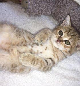 Золотой котенок мальчик