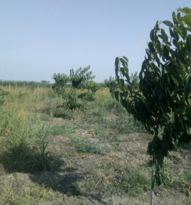 Участок, 45 сот., сельхоз (снт или днп)