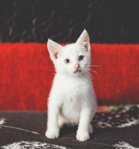 Плюшевые белоснежные котята - милашки!