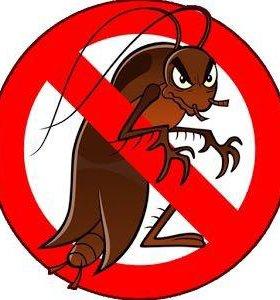 Избавлю вас от клопов, тараканов, блох, муравьёв