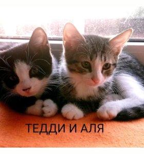 Котята Тедди и Аля, 3 мес, в добрые руки