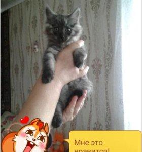 Кошка 2 месяца