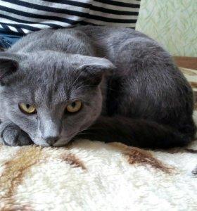 СРОЧНО! Кот Степан (Стёпка-растрёпка)