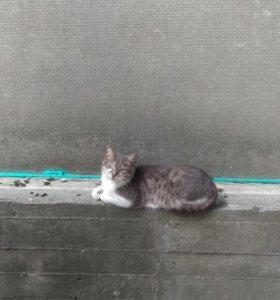 Беременная лишайная кошка