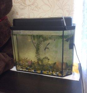 Рыбы+декор +аквариум