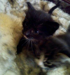 Отдам двух котят мальчика и девочку возраст месяц