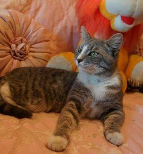 Чудесный дымчатый котик в добрые руки