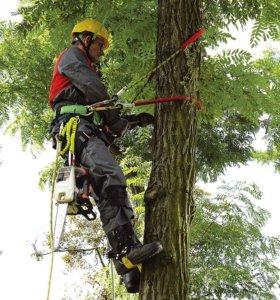 Спил деревьев альпинистами