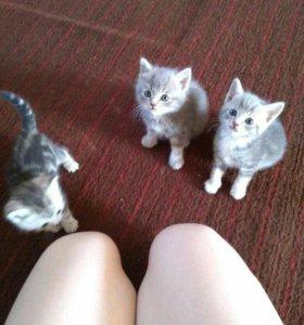 Продаю котят