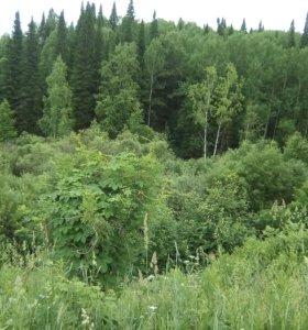 Белоголовник, листья мать-и-мачихи, иван-чая,ромаш