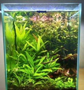 Аквариум 30 литров с растениями и креветками