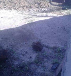 Копаем сливная яма траншеи Копаем фундамент на дом