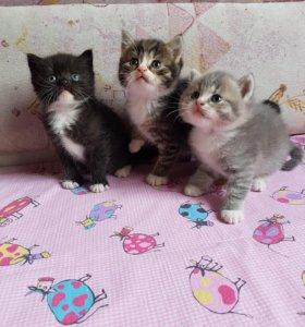 Пушистые котята