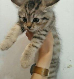 Котенок 1,5 месяца Котята