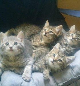 Веселые котята
