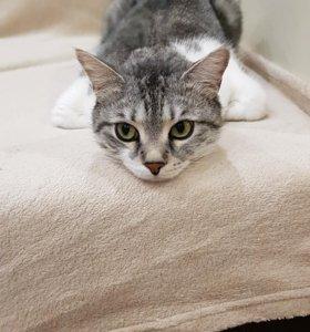 Кот обыкновенный