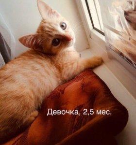 Котёнок (Девочка) в добрые руки