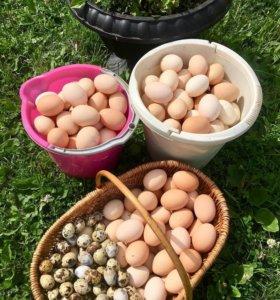 Фермерские свежие яйца